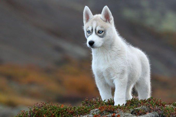 Los Perros Más Lindos Del Mundo Las 10 Razas Más Hermosas