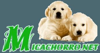 razas-de-perros-cachorros