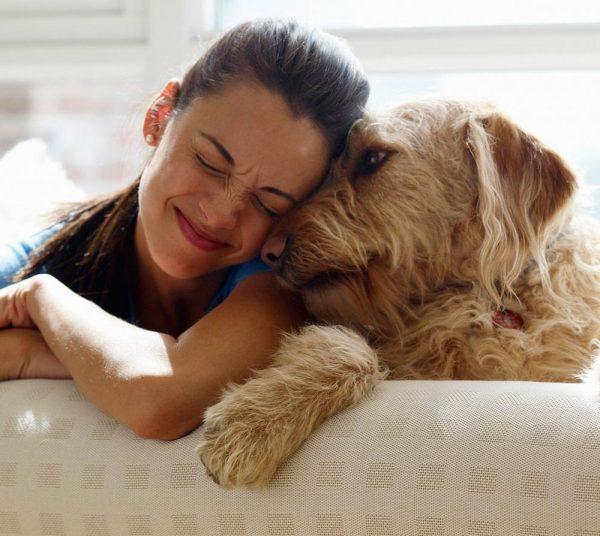 parásitos invasivos en perros