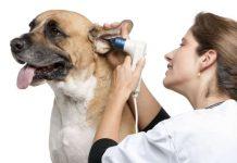 sordera en perros